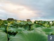 おだやかな気候と豊かな土地が生み出す農作物
