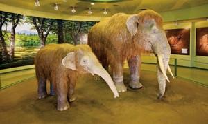 倉敷市立自然史博物館イメージ クリックで詳細ページへ