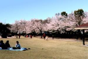 県立都市公園・水島緑地イメージ クリックで詳細ページへ