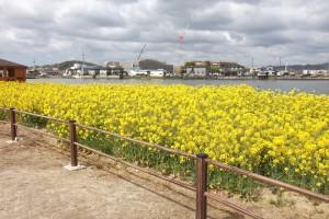 溜川(水辺の風景)イメージ クリックで詳細ページへ