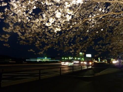 倉敷でお花見~夜桜ライトアップ~on 足高山2012
