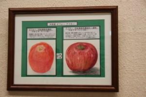 左が初心の時のリンゴ。右は6か月後の作品