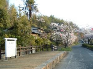 稗田の桜並木