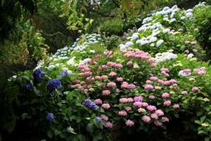 種松山 ~紫陽花の季~