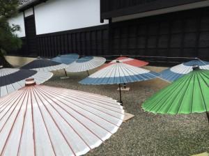 美しい和傘の天日干し