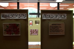 第一回ツツジ写真コンテスト  ~~~ツツジ山再生プロジェクト~~~