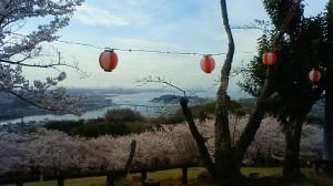 一期一会と散る桜 (4月3日)