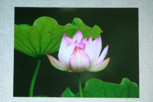 「コンパクトカメラで花を写す」<花の写し方・花とコミュニケーション>