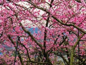 霞立つ玉島の春2016 vol.2