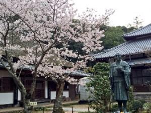 桜だより2016