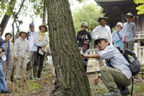 森の植物~10人のお友達~ツツジ再生プロジェクト(コバノミツバツツジ)2016