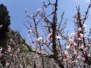 10 梅の花