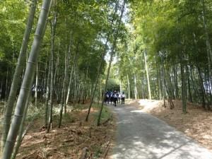 26 竹林
