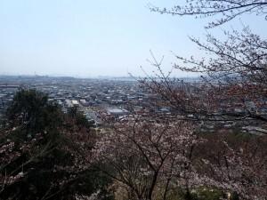 14、箆取神社桜