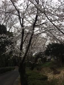 鶴形山公園2