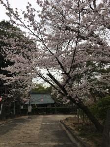 鶴形山公園4