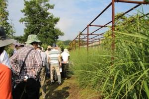 精霊花と山歩きを楽しむ 定例観察会 「植物園を楽しむ会」
