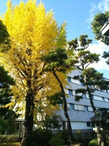 紅葉狩り&菊花展~倉敷の秋~2017
