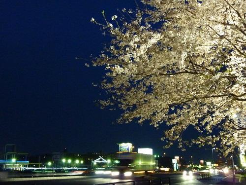 夜に舞う桜 IN 足高神社