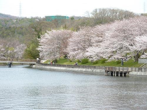 酒津公園の満開の桜2011~癒し~