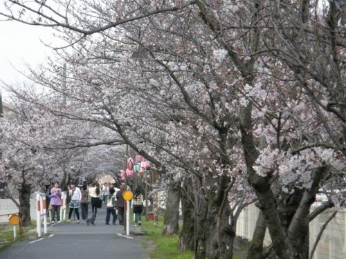 茶屋町の桜道