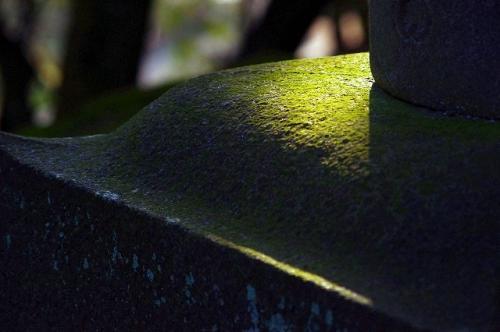 苔好きの皆さんへ・・備中玉島円通寺の苔がきれいです