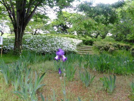 酒津公園の木花
