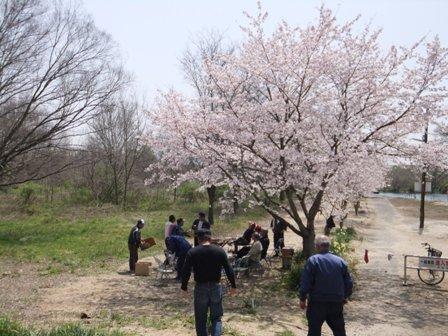 水江の渡し場桜満開