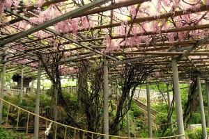 鶴形山公園イメージ クリックで詳細ページへ