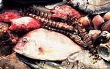 魚島フェスティバルin回船問屋の写真1