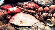 魚島フェスティバルin回船問屋