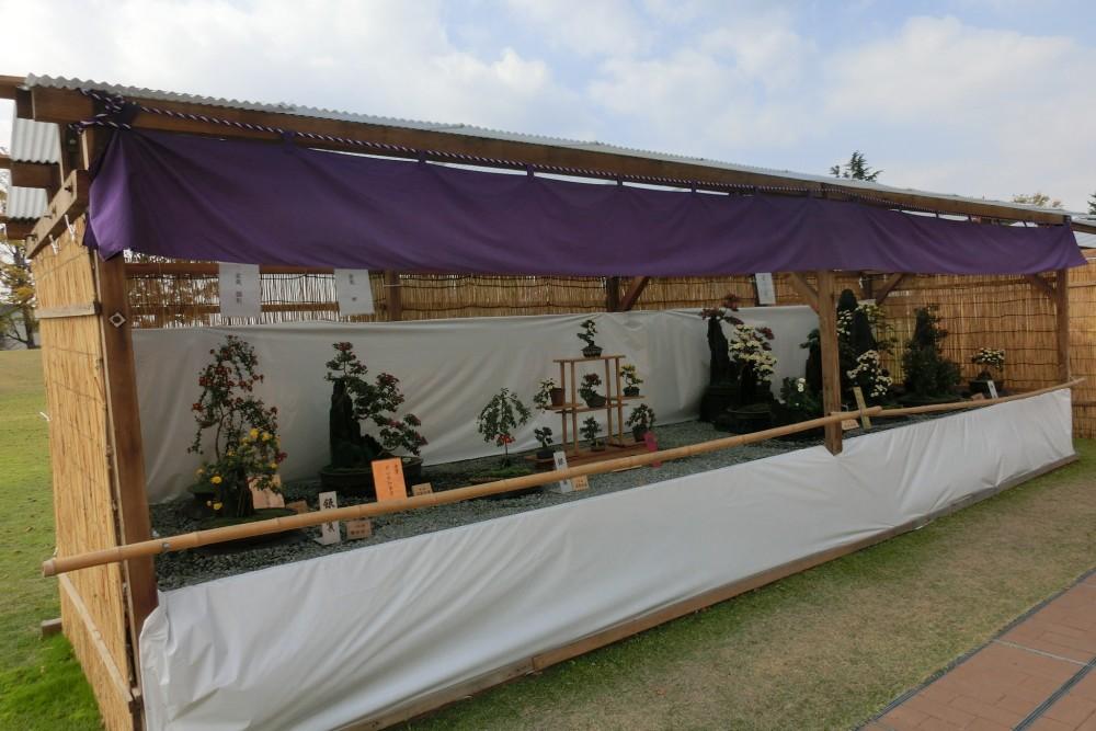 第50回 倉敷市菊花展の写真3