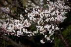 四季折々の花が楽しめます