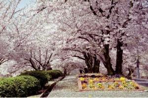 種松山公園西園地イメージ クリックで詳細ページへ