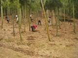 たけのこ掘り体験(倉敷市真備町観光たけのこ園)の写真03