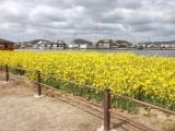 溜川(水辺の風景)