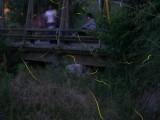 第21回 「蛍遊の水辺・由加」ホタルまつりの写真1