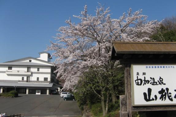 由加山に凛として佇む「山桃花」。四季折々の花に彩られます。