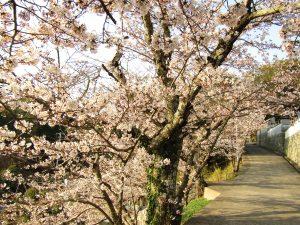 玉島に春がくる2018