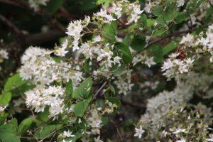 第74回 植物園を楽しむ会 白妙の花々を楽しむ