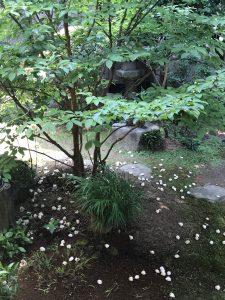 第35回 沙羅の花を観る会 2018