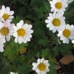植物園を楽しむ会81「木枯らしに咲く花々を楽しむ」