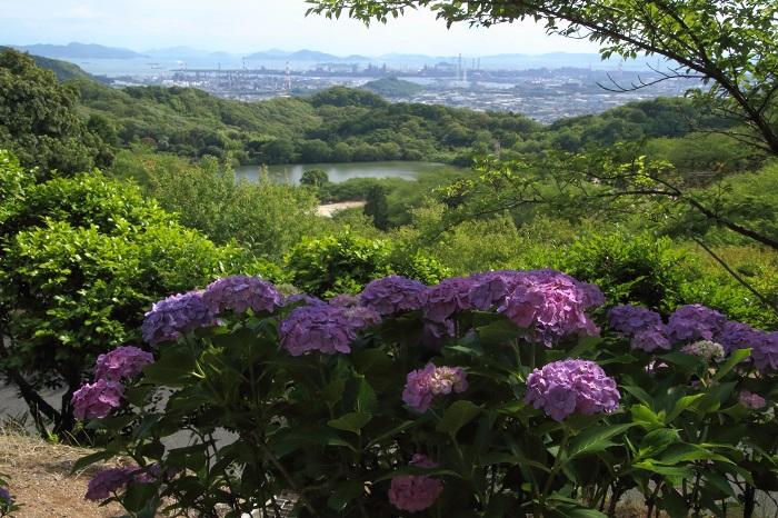 令和元年 種松山の紫陽花を楽しむ & お知らせ♪