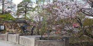 倉敷美観地区の桜~2020~
