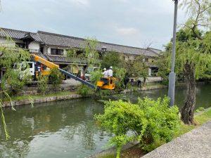 倉敷美観地区の柳の剪定が行われました!
