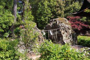 倉敷の総鎮守 阿智神社の「阿知の藤」 in  2021